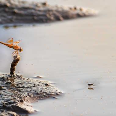 La libellule et la mouche par patrick69220