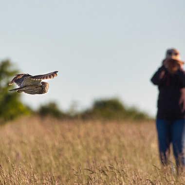 Bird watcher par Farim