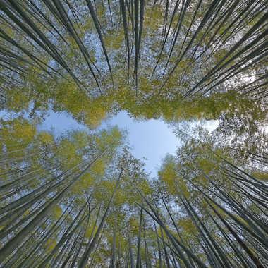 Bamboo path par Ariel
