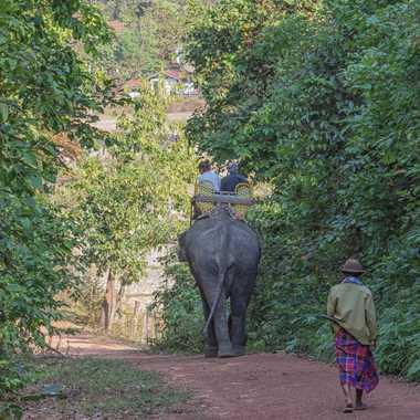 Éléphant au village. par patrick69220