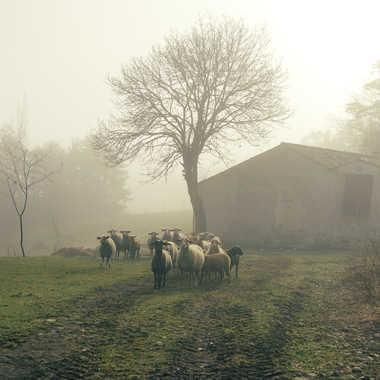 Ambiance pastorale. par Philgreffe