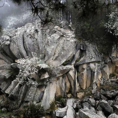 pétales de roches par chris222