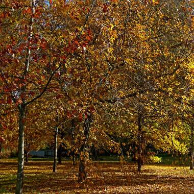 bel automne 1 par LABADIE