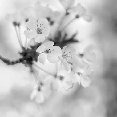 Ambiance printemps par Fantine