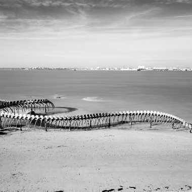 Serpent d'Océan par sylmorg