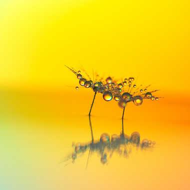 Création macro. par Philgreffe