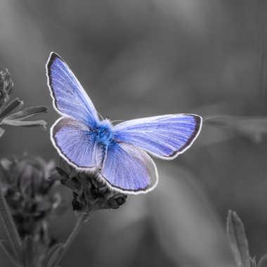 Blue Touch' par Franck06