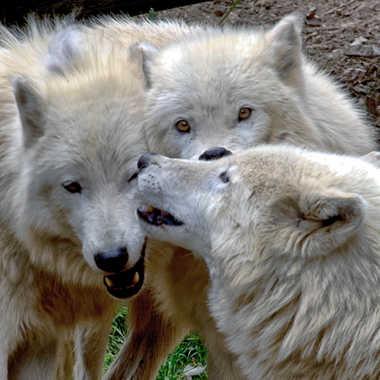Complicité animal. par patrick69220