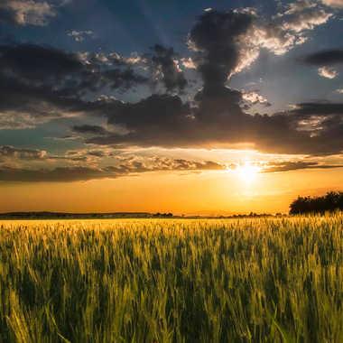 sunset sur les blés par Jeremy_7517