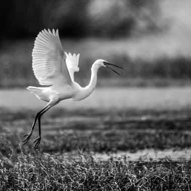 Danse classique par Dav.sv