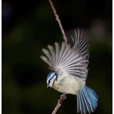 A tire d'ailes par Isabellefalconnet