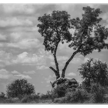 Scène africaine par patrick69220