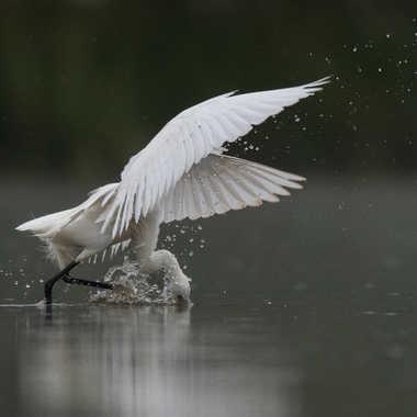 Avoir le bec dans l'eau.... par jeromebouet