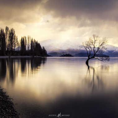 The lonely tree par AlexM