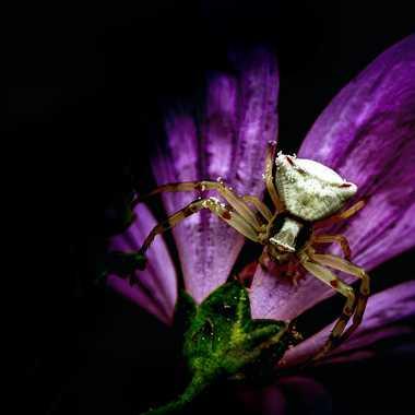 Obscur Spider par FredoRoiDuVelo