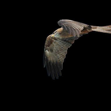 Vol de nuit par lynx