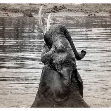 Éléphant au bain par patrick69220