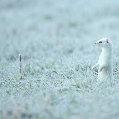 Givre, à défaut de neige... par Farim