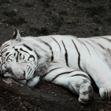L'heure de la sieste. par lynx