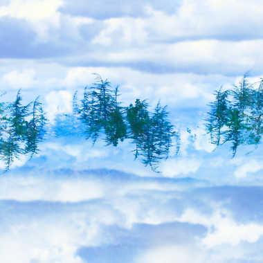 Arbres dans les nuages par Farim