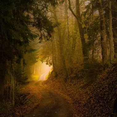 Lumière au bout du chemin. par jeromeh