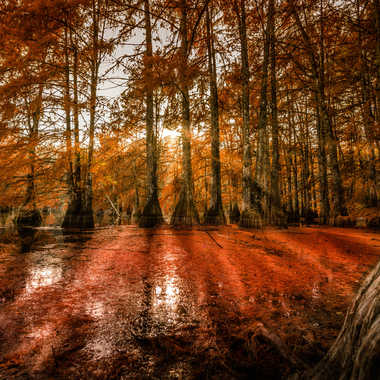 Rayons d automne  par brj01