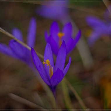 Fleurs de saison par Mylene.Lavie