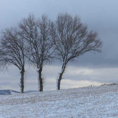 Les 3 sages de la colline par Lolo Zikgyver