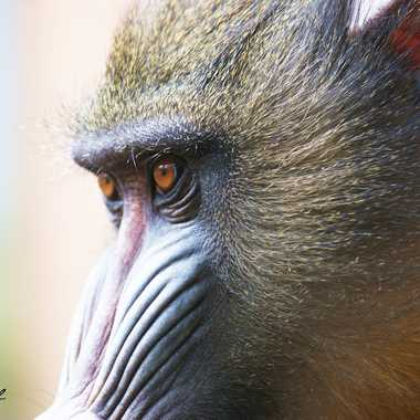 Dans l'oeil du singe par Ephemere