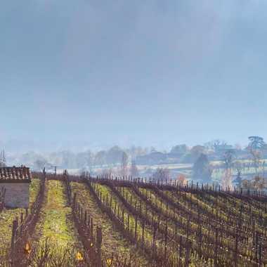 Paysage viticole par patrick69220