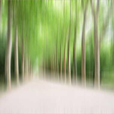 Filé d'arbres par Aurimec