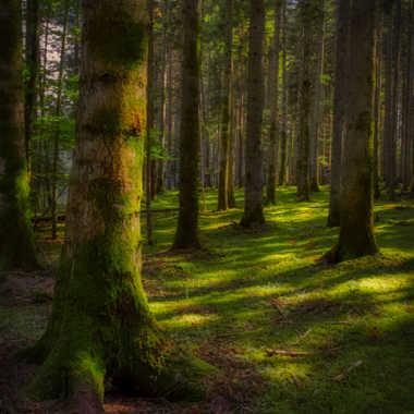 La forêt enchantée. par FloRd