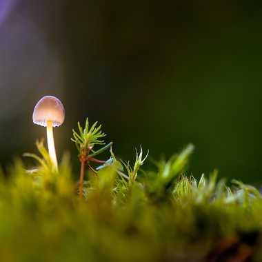 Petit champignon par Guy07