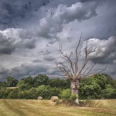 Le vieil arbre par Photnad