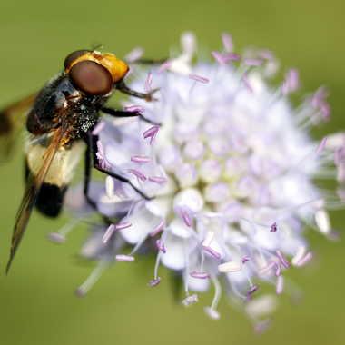 Pollen par Farim