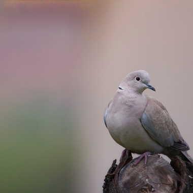 Oiseau de jardin par patrick69220