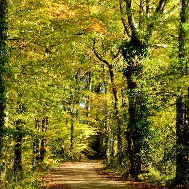 Avant l'hiver dernière balade dans les feuilles par clero