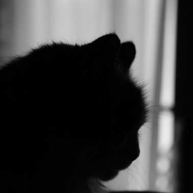 Tricolore en noir et blanc !! par Maridan