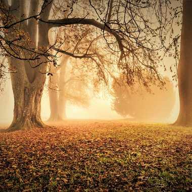 Vers la lumière par 3pphoto