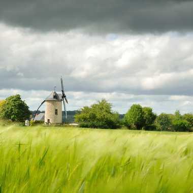 Moulin en Anjou par alain_3302