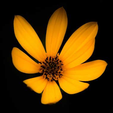 flower power  par brj01