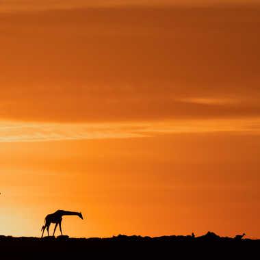 une nouvelle journée commence au Kenya par patouphoto