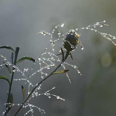 Fin de saison au jardin par patrick69220