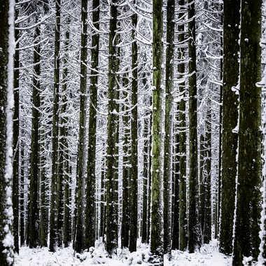 Mikado forestier par Stefano