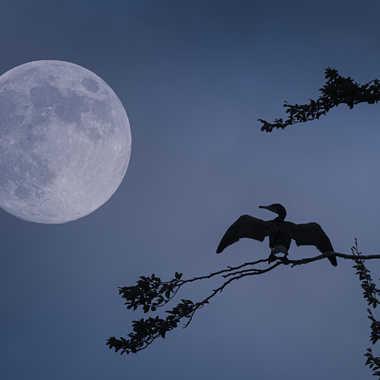 Lune Bleue par Thierry Rossier