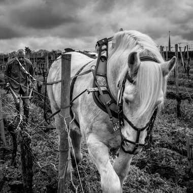 Travail dans les vignes à l'ancienne par Joseph1960