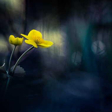 En jaune et noir par Emmanuel Graindépice