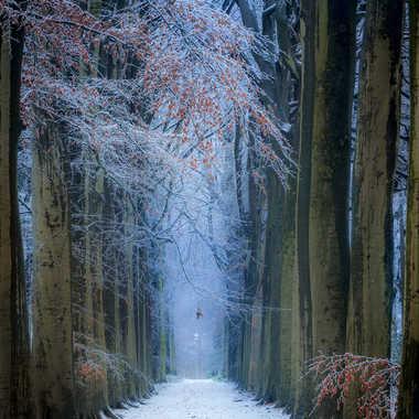 Quand l'hiver rencontre l'automne... par marc_1328