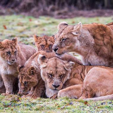 Une famille unie par dvandenabelle
