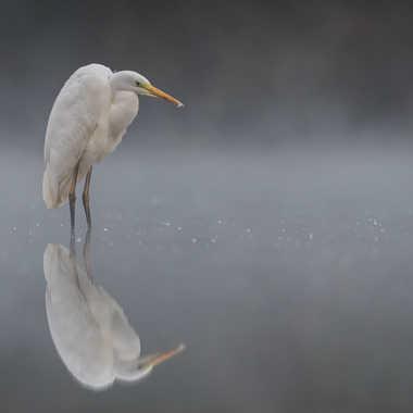 La gardienne de l'étang par jeromebouet